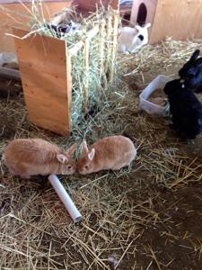TRACS Rabbit Sanctuary