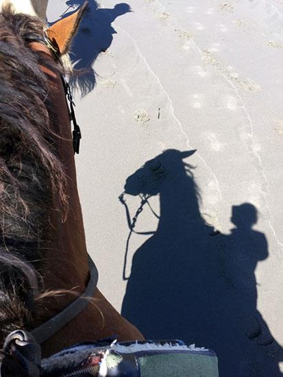 oceans_horse